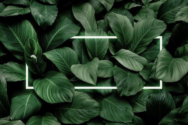 Spathiphyllum cannifolium concetto texture astratta verde con cornice bianca sfondo naturale