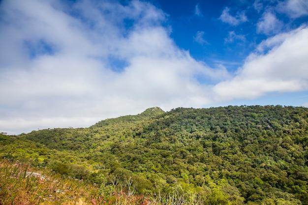 Spettacolare paesaggio della foresta pluviale con catena montuosa