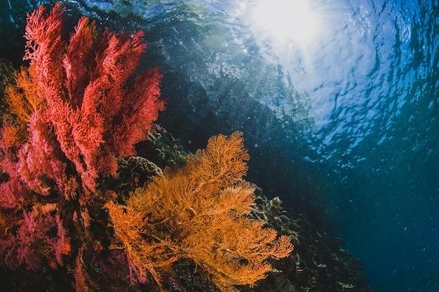 Spettacolare seafan e corallo con uno spazio di copia con la luce del sole