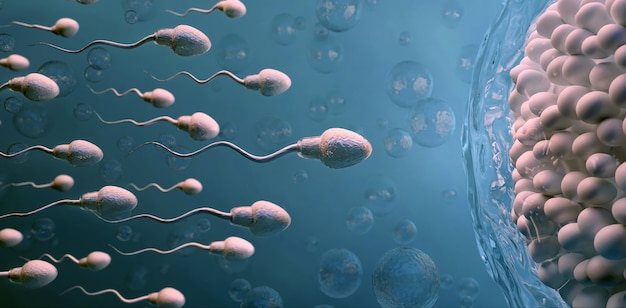 Sperma e cellula uovo