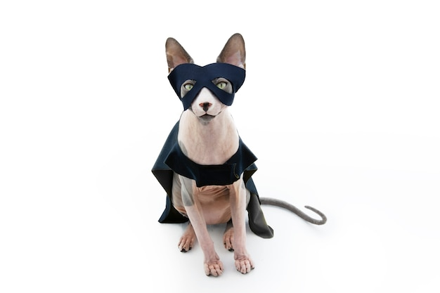 Costume da supereroe gatto sphynx che celebra il carnevale con mantello e maschera. isolato sulla superficie bianca.