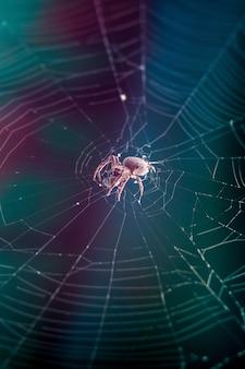 Un ragno al centro della ragnatela avvolge la sua vittima in un bozzolo. spide e ragnatela su uno sfondo scuro