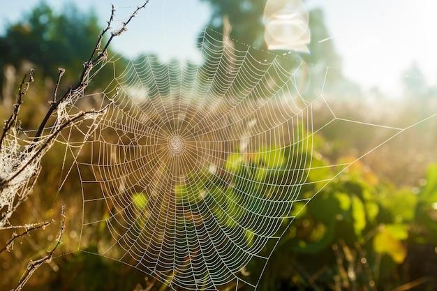 Ragnatela sullo sfondo del sole e del primo piano dell'erba del campo ragnatela sullo sfondo