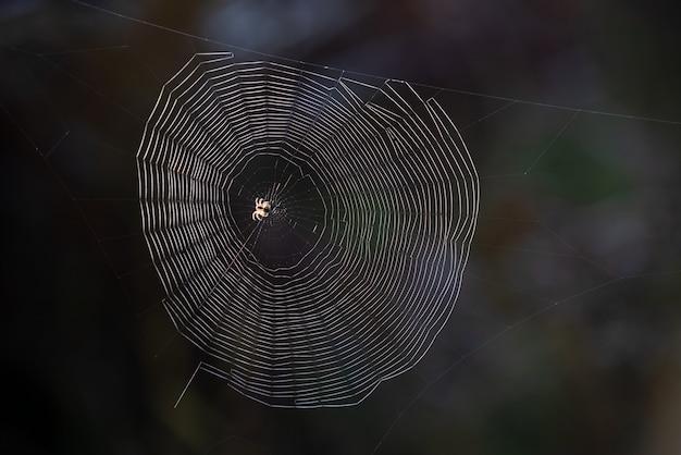 Ragno e web su uno sfondo nero sfocato. la bellezza nella natura