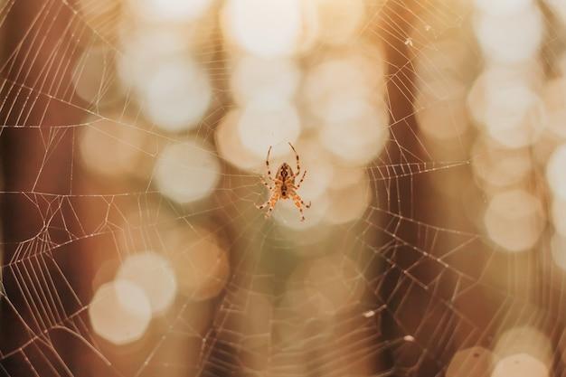 Ragno in una ragnatela nella foresta.