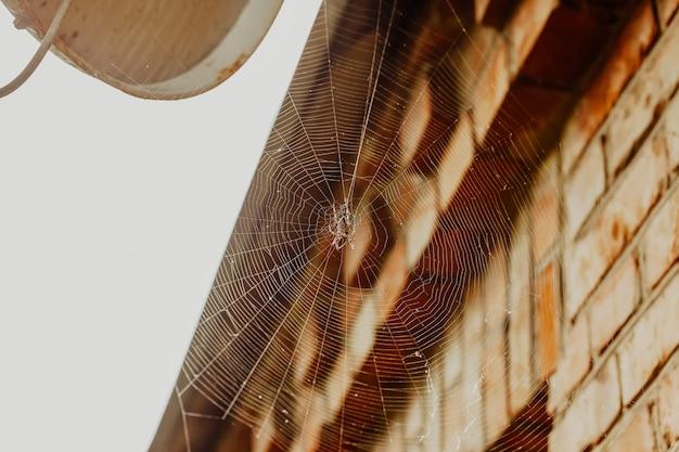 Ragno su una ragnatela vicino alla casa