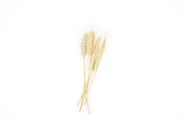 Spighette di grano maturo su uno sfondo bianco isolare