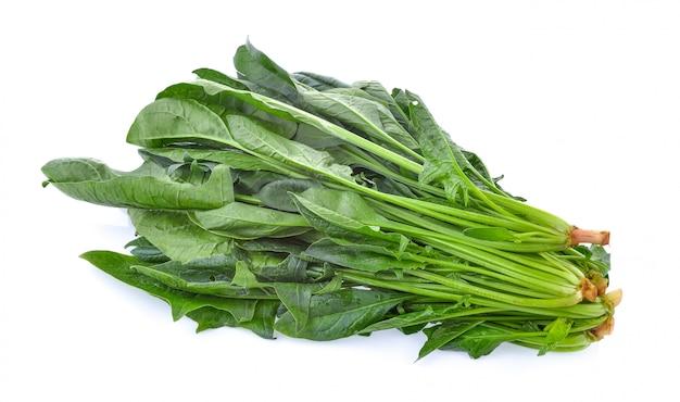 Fogli degli spinaci isolati su bianco isolato