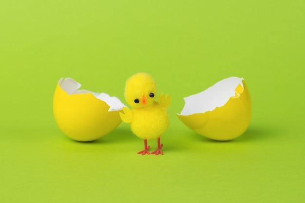 Un uovo giallo diviso e un pollo giallo su sfondo verde.