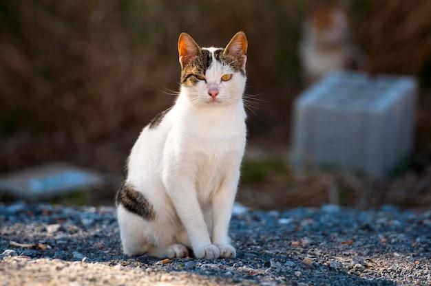 Il gatto maculato si siede e guarda la telecamera.