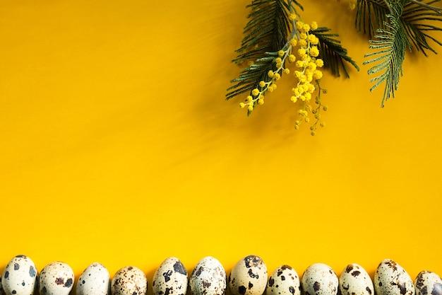 Uova di quaglia maculate su sfondo giallo sul bordo inferiore della cornice e un ramo di mimosa con ombre.