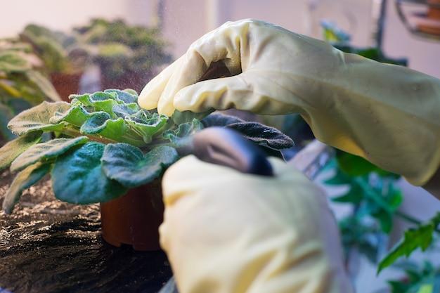 Spruzzando le piante in giardino, con spray per le mani, disinfestazione e piante fertilizzanti.