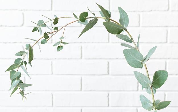 Rametto di eucalipto contro il muro di mattoni bianchi.