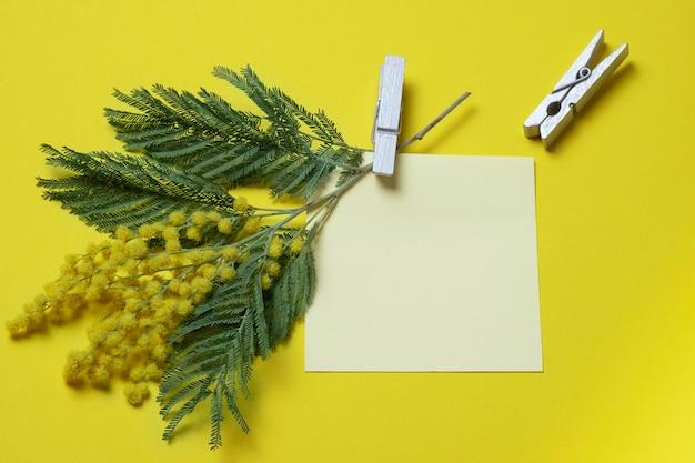 Un rametto di mimosa su uno sfondo giallo è attaccato a un foglio di carta vuoto con una molletta.