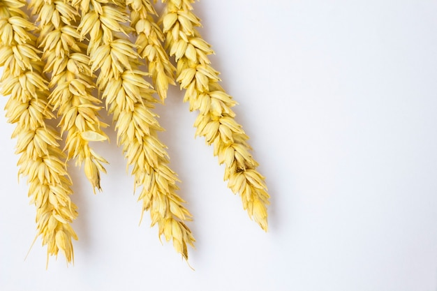 Rametti di grano