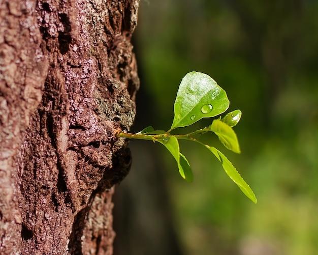 La primavera risveglia una foglia di rugiada nella foresta