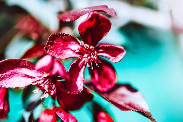 Sfondo di primavera con fiori di melo rosa brillante in fiore. bella scena della natura con la luce solare. orchard astratto sfondo sfocato primavera con copia spazio. pasqua giornata di sole moody colori audaci