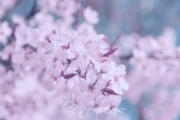 Bordo primaverile o sfondo con fiore