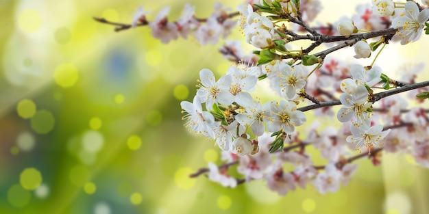 Ramo di primavera con fiori soleggiati, superficie della natura