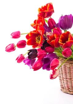 Tulipani di colore di primavera in un bouquet con bellissimi fiori rosa, rossi isolati su bianco