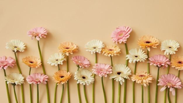 Composizione primaverile di gerbere fresche su sfondo di carta gialla. come cartolina per la festa della mamma o l'8 marzo o la festa della mamma. lay piatto
