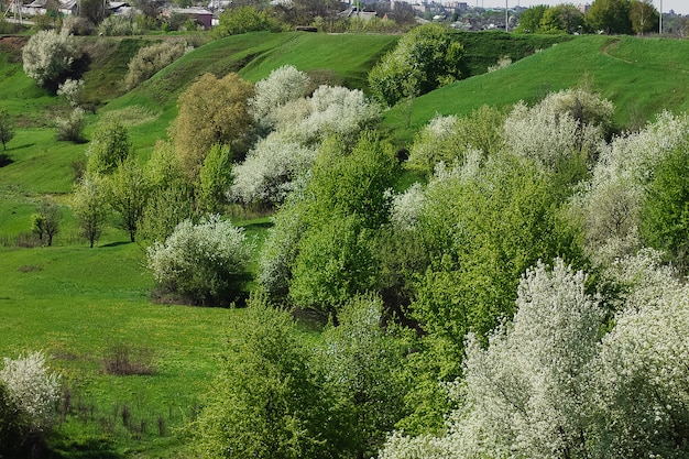 Vista sulla campagna primaverile con strada, villaggi in fiore di ciliegio, colline. ucraina.