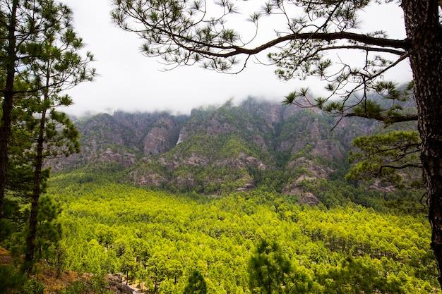 Primavera in cumbrecita, parco naturale della caldera de taburiente, isola di la palma, isole canarie, spain