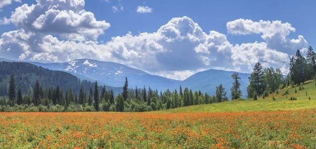 Giornata di primavera in montagna che si affaccia su un prato fiorito