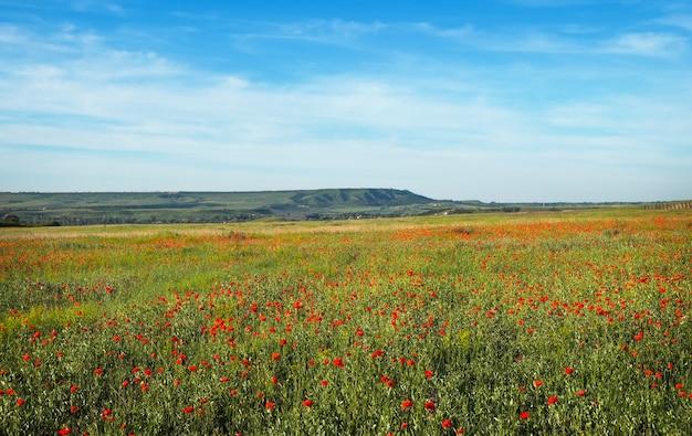 Fiori di primavera in campo. bel paesaggio. composizione della natura