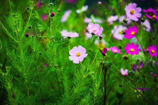 Fiori di primavera