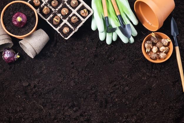 Sfondo di giardinaggio di primavera. attrezzi da giardinaggio con bulbi di giacinto e crocus su sfondo texture terreno fertile. vista dall'alto, copia dello spazio.