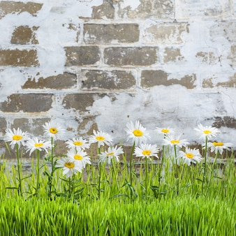 Erba e fiori di primavera su un vecchio muro