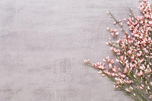 Cartolina d'auguri di primavera, fiori di colore corallo vivente sullo sfondo pastello.