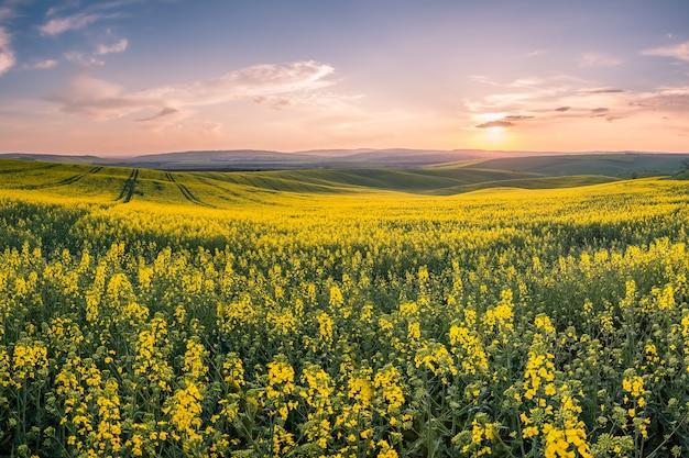 Paesaggio primaverile con campi agricoli, sfondo di agricoltura