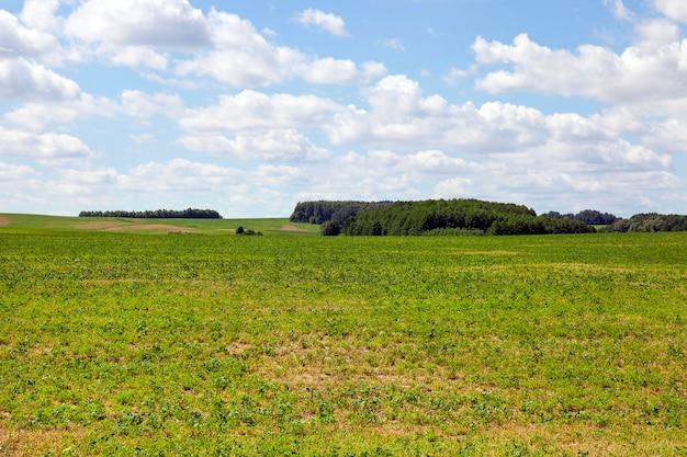 Paesaggio primaverile con erba verde e alberi nella foresta. cielo azzurro e nuvole sopra il campo del villaggio-fattoria