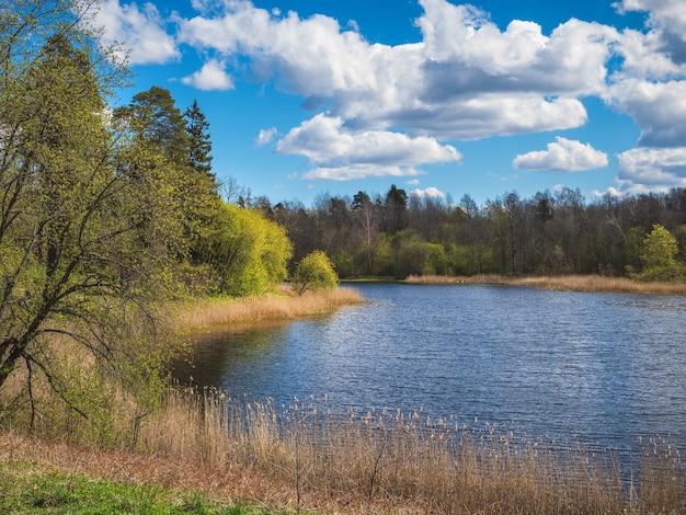 Paesaggio primaverile con un albero in riva al lago.