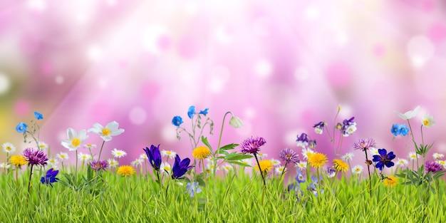 Prato primaverile con fiori selvatici soleggiati