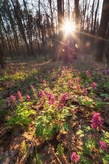 Mattina di primavera nella foresta, fiori e sole