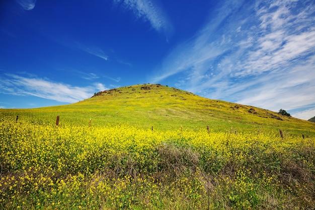 Prato di montagne di primavera