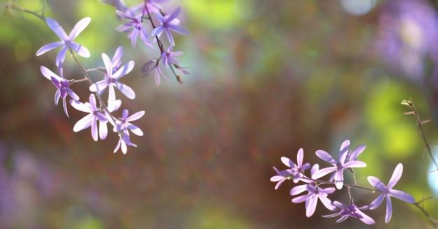 Sfondo di natura primavera con fiori che sbocciano