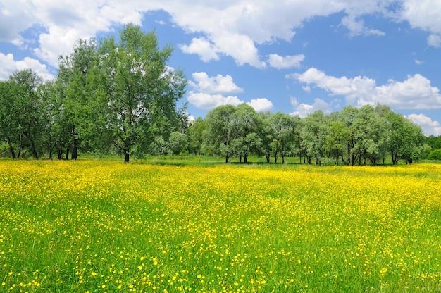 Paesaggio di natura primaverile con fiori che sbocciano giallo brillante e cielo blu sopra il giorno soleggiato e limpido. sfondo naturale e carta da parati
