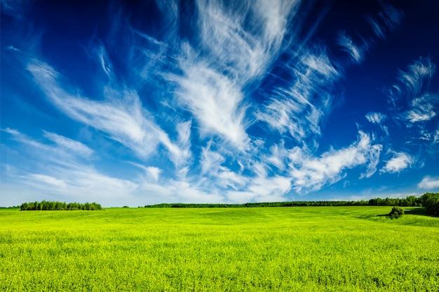 Lanscape di paesaggio del campo verde di estate della primavera