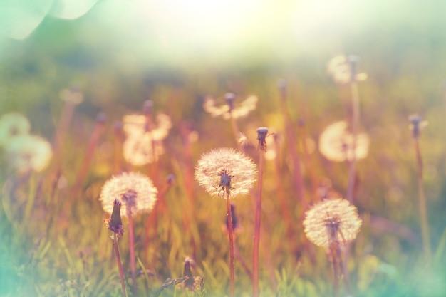 Prato soleggiato di primavera