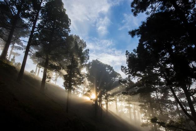 Tramonto primaverile nel parco naturale della caldera de taburiente, isola di la palma, isole canarie, spain