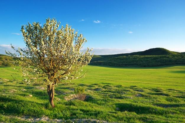 Albero della primavera in prato verde