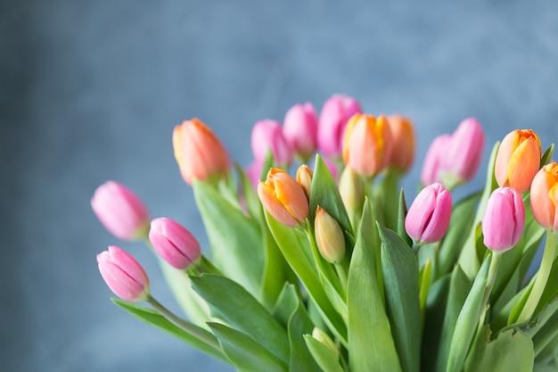 Fiori del tulipano della primavera sulla parete grigia. biglietto d'auguri. copia spazio. spazio libero. cartolina.