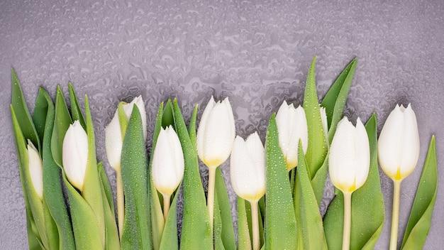 Tulipani bianchi di primavera su uno sfondo grigio bagnato