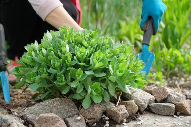 Lavoro primaverile in giardino, mani di donna in guanti con attrezzi da giardino