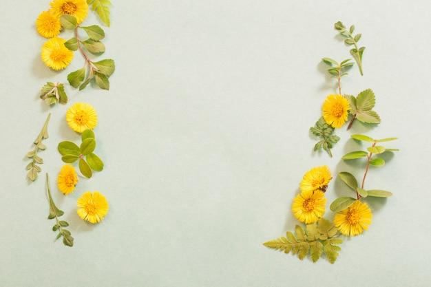 Fiori primaverili gialli su carta