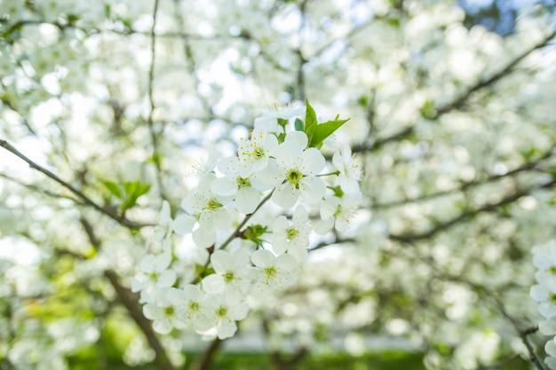 La primavera inizia in giardino.